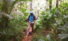 Woman walking in woodland in tropical country