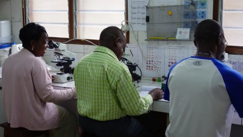 Photo showing researchers using microscopes